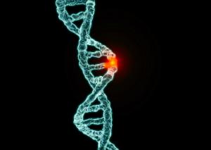 BRCA chromosome