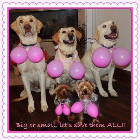 brca world - dog boobs